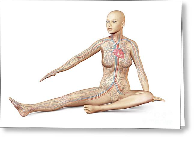 Digital Artery Greeting Cards - Female Body Sitting In Dynamic Posture Greeting Card by Leonello Calvetti