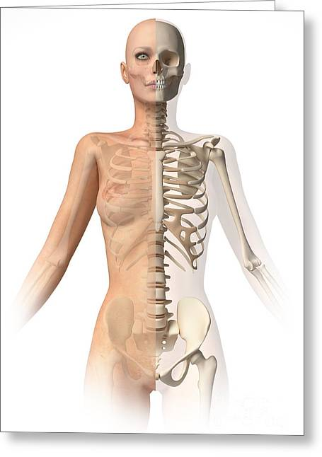 Floating Ribs Greeting Cards - Female Body With Bone Skeleton Greeting Card by Leonello Calvetti