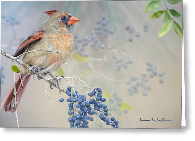 Female Northern Cardinal Greeting Cards - Female Cardinal and Wild Berries Greeting Card by Bonnie Barry