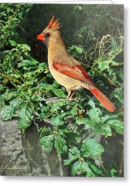 Female Cardinal  Greeting Card by Ken Everett