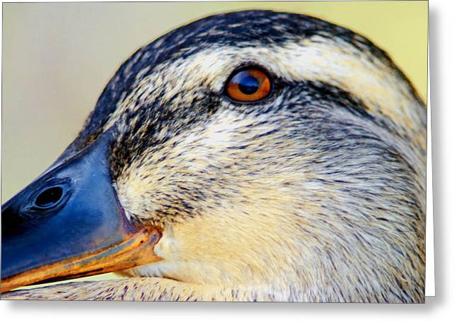 Duck Dynasty Greeting Cards - Female Duck Close Up Greeting Card by Optical Playground By MP Ray