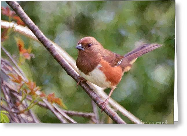 Brown Towhee Greeting Cards - Female Eastern Towhee Digital Painting Greeting Card by Kerri Farley