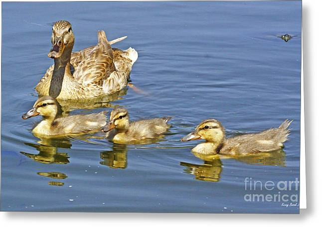 Baby Mallards Digital Art Greeting Cards - Female Mallard Duck Plus Three Greeting Card by Kenny Bosak