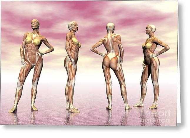 Female Muscular System From Four Points Greeting Card by Elena Duvernay