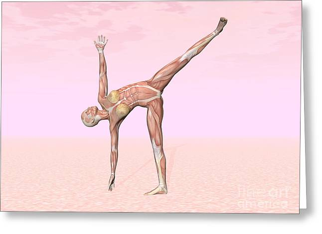 Physical Body Digital Greeting Cards - Female Musculature Performing Half Moon Greeting Card by Elena Duvernay