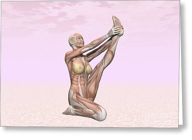 Physical Body Digital Greeting Cards - Female Musculature Performing Heron Greeting Card by Elena Duvernay