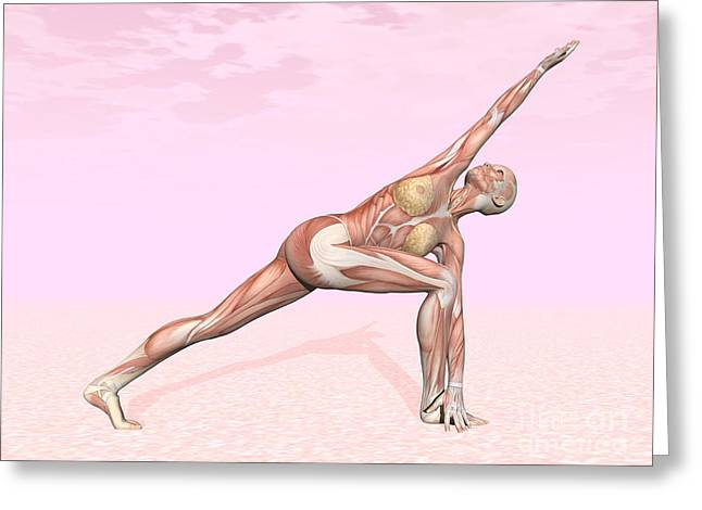 Physical Body Digital Greeting Cards - Female Musculature Performing Revolved Greeting Card by Elena Duvernay