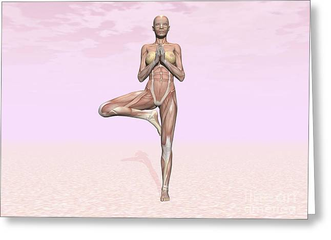 Physical Body Digital Greeting Cards - Female Musculature Performing Tree Yoga Greeting Card by Elena Duvernay