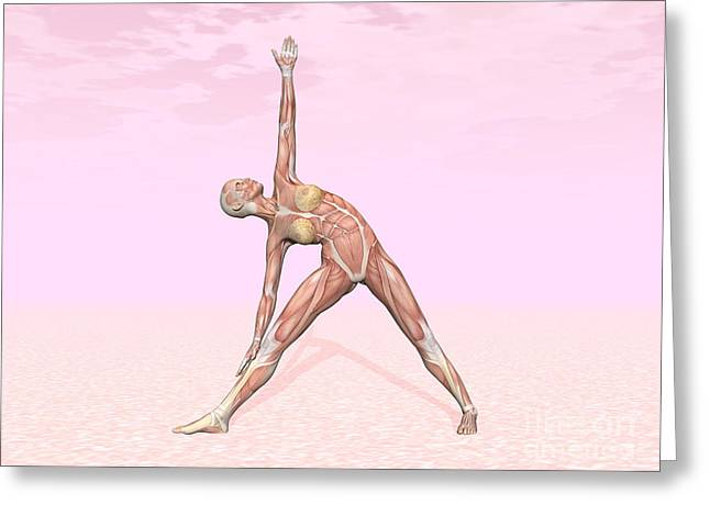 Physical Body Digital Greeting Cards - Female Musculature Performing Triangle Greeting Card by Elena Duvernay