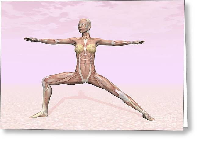 Physical Body Digital Greeting Cards - Female Musculature Performing Warrior Greeting Card by Elena Duvernay
