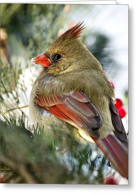 Cardinals In Snow Greeting Cards - Female Northern Cardinal Square Greeting Card by Christina Rollo