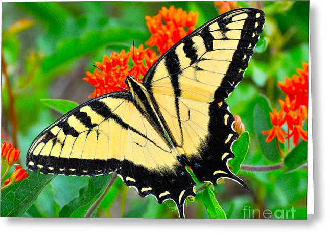 Dogwood Silhouette Greeting Cards - Female Swallow-tail Greeting Card by Stuart Mcdaniel