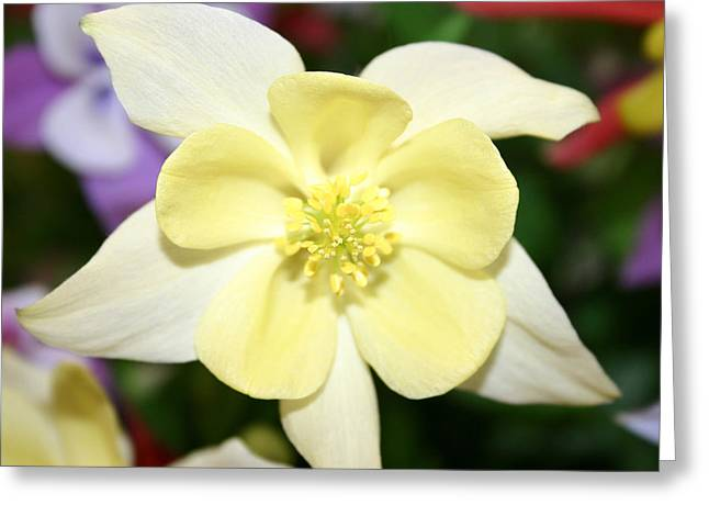 Flower Center Greeting Cards - Femininity  Greeting Card by Sarah OToole