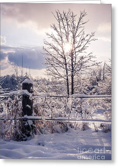 Barriers Greeting Cards - Fence and tree frozen in ice Greeting Card by Elena Elisseeva