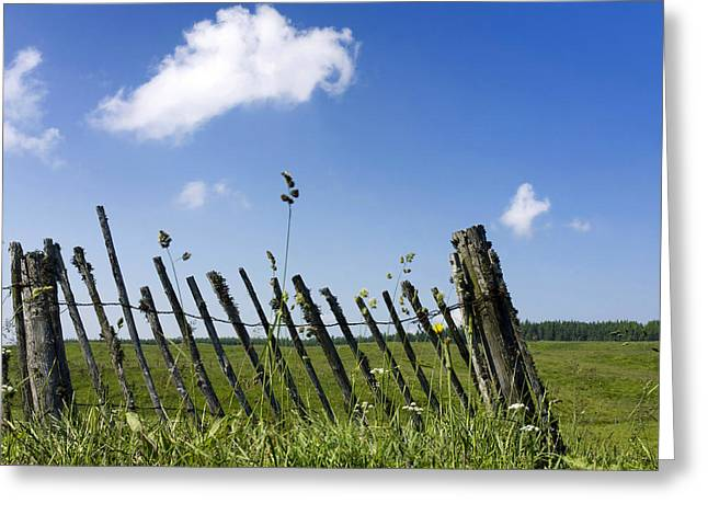 Tranquil Scene Greeting Cards - Fence in a pasture Greeting Card by Bernard Jaubert