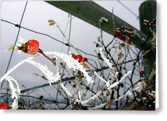 Fence Line Greeting Card by Will Borden