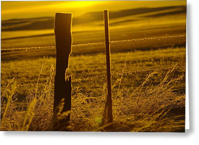 Fence Post In The Morning Light Greeting Card by Jeff Swan