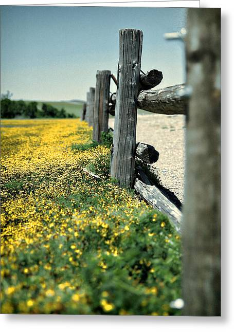 Recently Sold -  - Wildlife Refuge. Greeting Cards - Fence Posts Greeting Card by Charrie Shockey