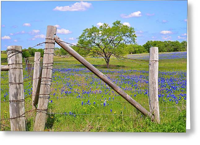 Fenced-in Beauty Greeting Card by Lynn Bauer