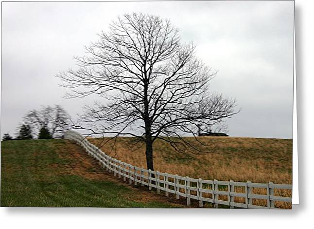 Lines Tapestries - Textiles Greeting Cards - Fenced in Tree Greeting Card by Thia Stover
