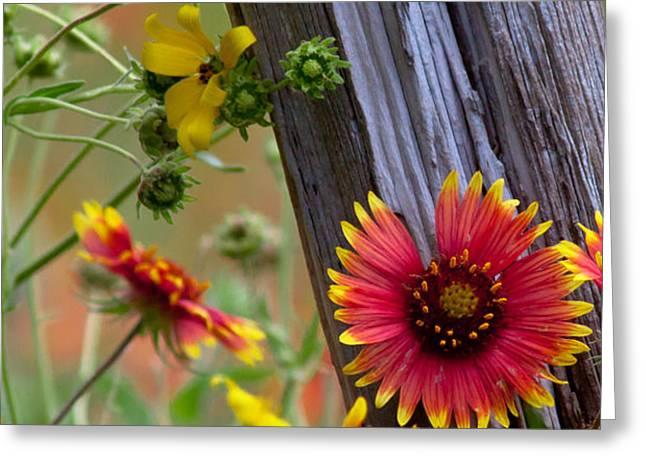 Fenceline Wildflowers Greeting Card by Robert Frederick
