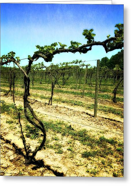 Grape Vine Greeting Cards - Fenn Valley Vineyards Greeting Card by Michelle Calkins