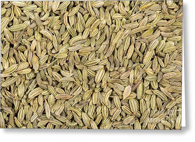 Condiment Greeting Cards - Fennel seeds Greeting Card by Jane Rix