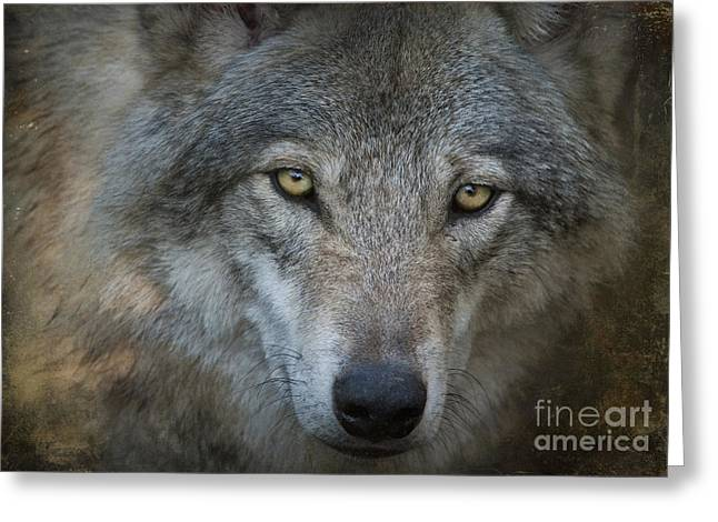 Photoart Greeting Cards - Fenris... Greeting Card by Nina Stavlund