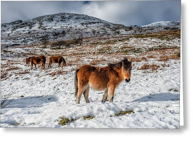 Wild Horse Digital Art Greeting Cards - Feral Horse Greeting Card by Adrian Evans