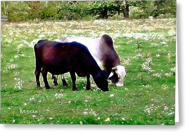 Brahma Bull Greeting Cards - FERDINAND and MOLLY Greeting Card by Sadie Reneau