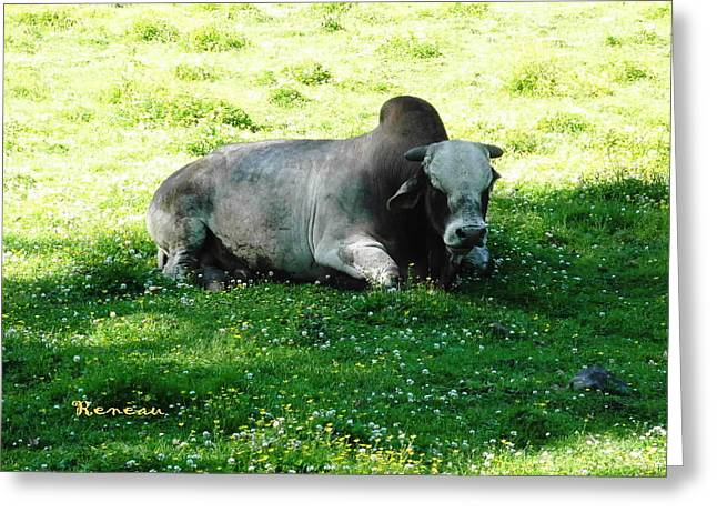 Brahma Bull Greeting Cards - Ferdinand the Bull Greeting Card by Sadie Reneau