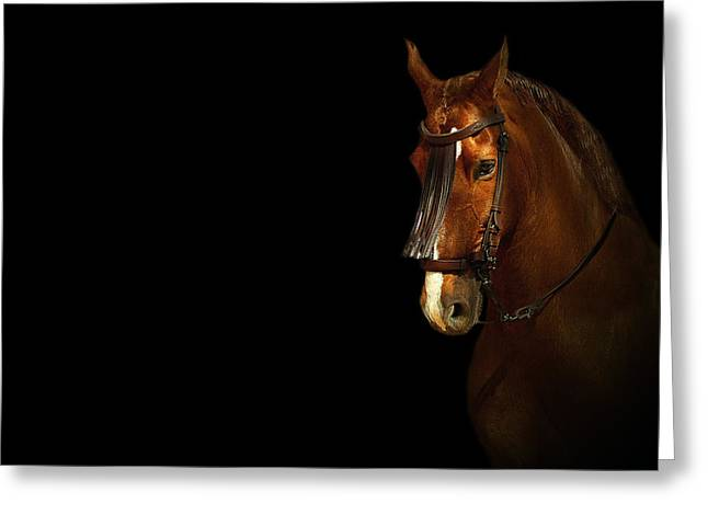 Race Horse Mixed Media Greeting Cards - Feria 1 - Collection  Greeting Card by Andy Armfield