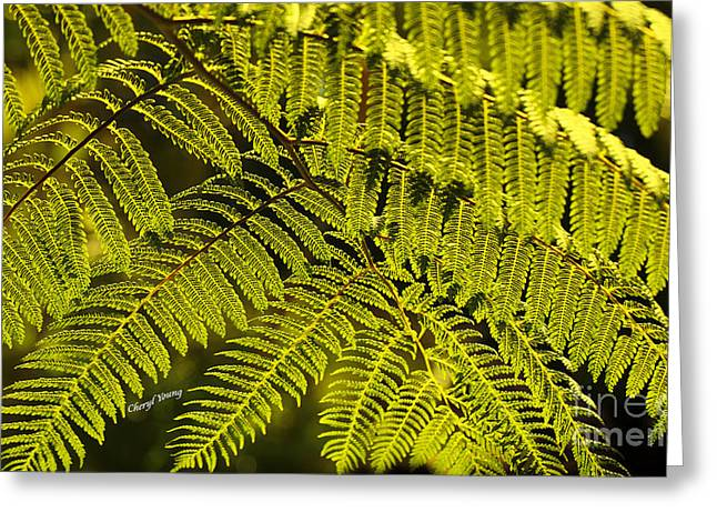 Cyatheales Greeting Cards - Fern 4 Greeting Card by Cheryl Young