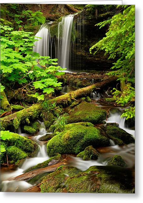 Old Growth Greeting Cards - Fern Falls Panoramic Greeting Card by Leland D Howard