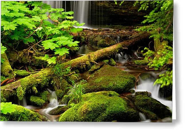 Fern Falls Panoramic Greeting Card by Leland D Howard