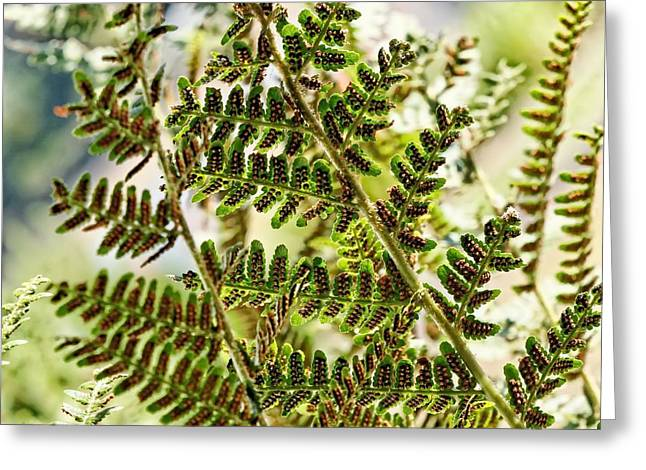 My Ocean Greeting Cards - Fern Greeting Card by   FLJohnson Photography