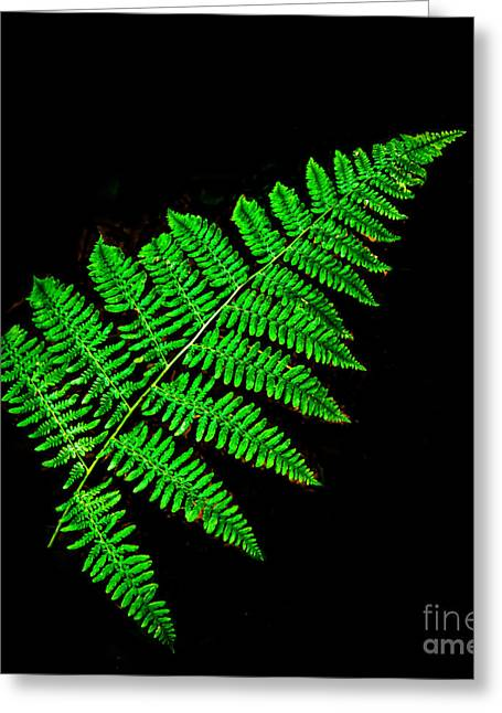 Haybales Greeting Cards - Fern Frond II Greeting Card by Robert Bales