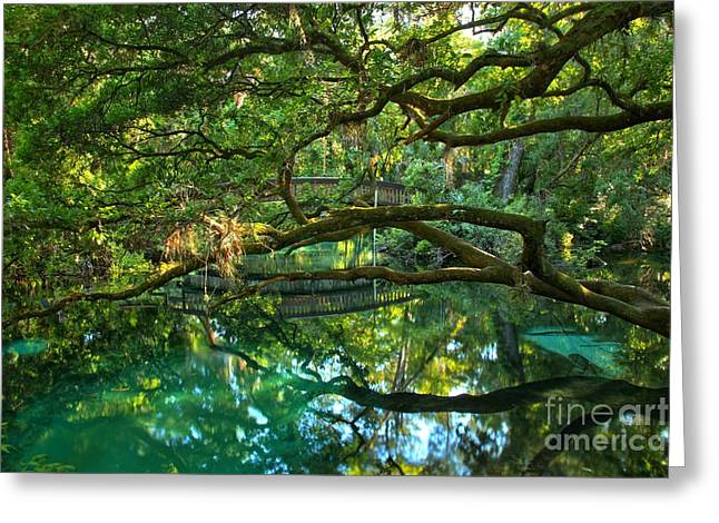 Oak Hammocks Greeting Cards - Fern Hammock Greeting Card by Adam Jewell