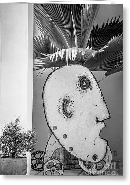 Liberal Greeting Cards - Fern Head Key West - Black and White Greeting Card by Ian Monk