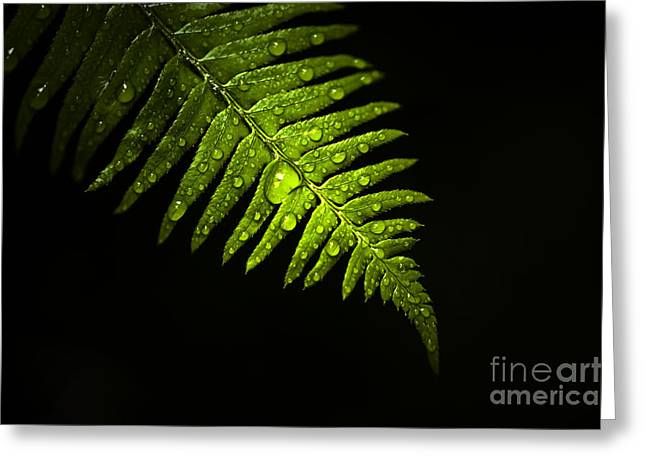 Close Focus Nature Scene Greeting Cards - Fern Highlight Greeting Card by Jim Corwin