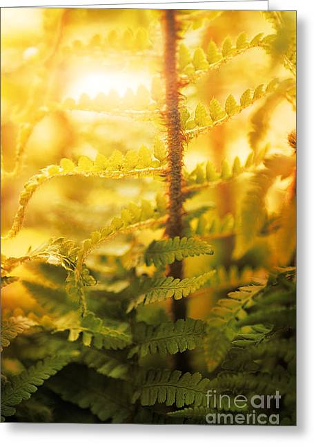Fern In Forest Greeting Card by Mythja  Photography