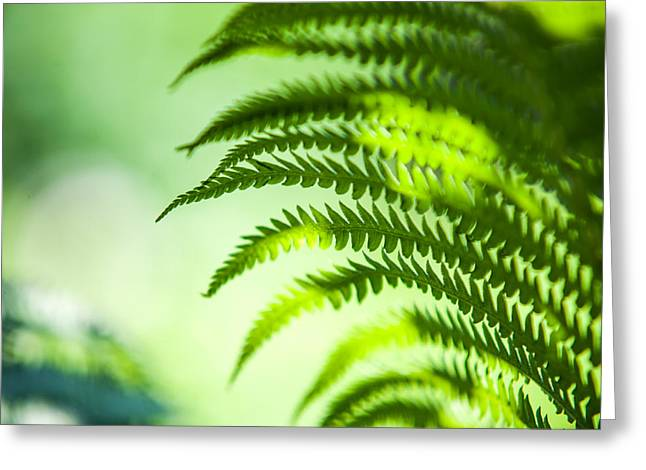 Reach Greeting Cards - Fern Leaf Lit with Light. Healing Art Greeting Card by Jenny Rainbow