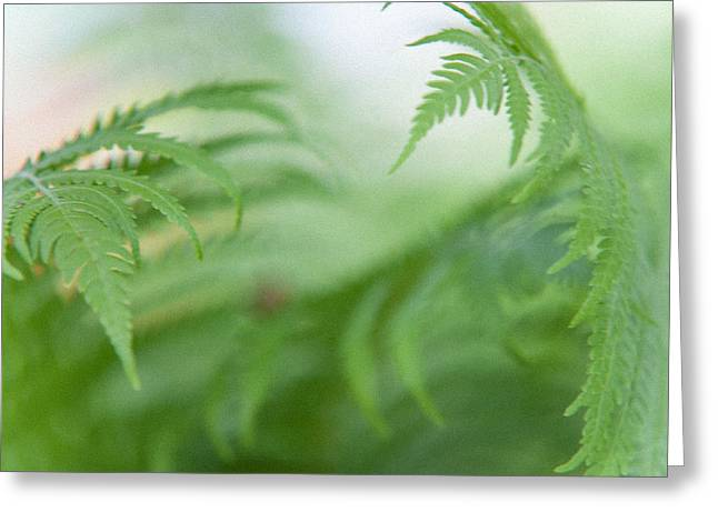 Reach Greeting Cards - Fern Leaves Dance. healing Art Greeting Card by Jenny Rainbow