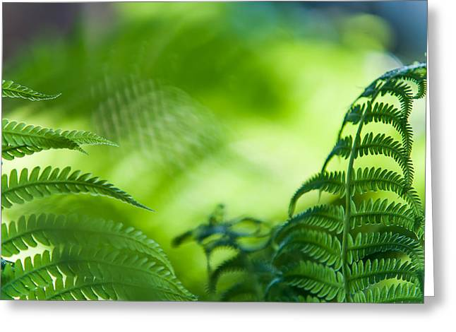 Reach Greeting Cards - Fern Leaves. Healing Art Greeting Card by Jenny Rainbow