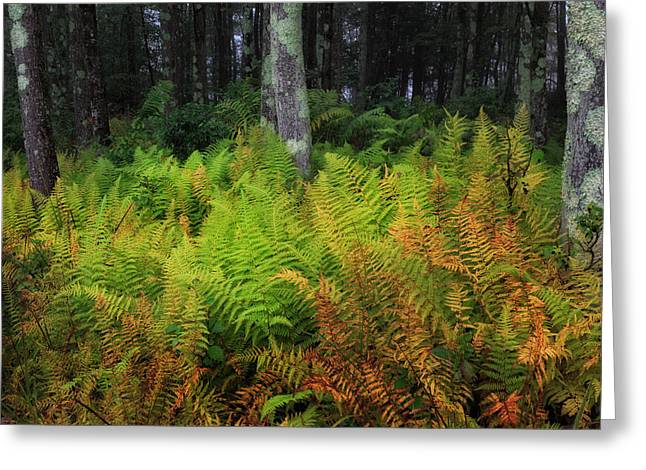 Early Autumn Greeting Cards - Fern Of Autumn Greeting Card by Bill  Wakeley