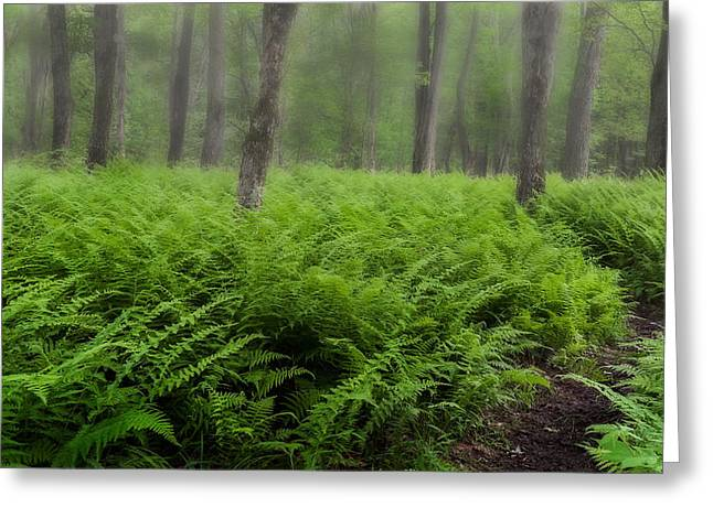 Southern New England Greeting Cards - Fern of the Fog Greeting Card by Bill  Wakeley