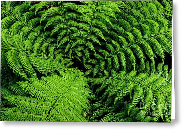 Photo Image Greeting Cards - Fern Greeting Card by Photo Image