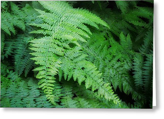 Lush Green Greeting Cards - Fern Square Greeting Card by Bill  Wakeley