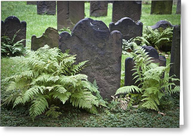 Occupy Greeting Cards - Ferns and Headstones Greeting Card by Teresa Mucha