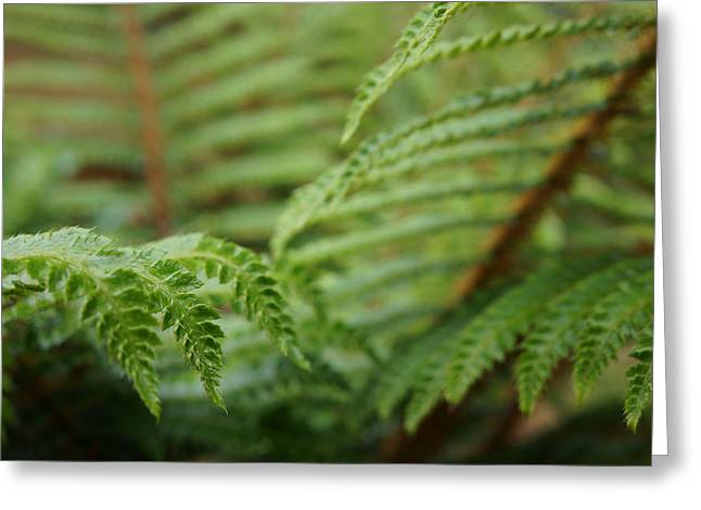 Ferns Art Prints Green Fores Fern Greeting Card by Baslee Troutman